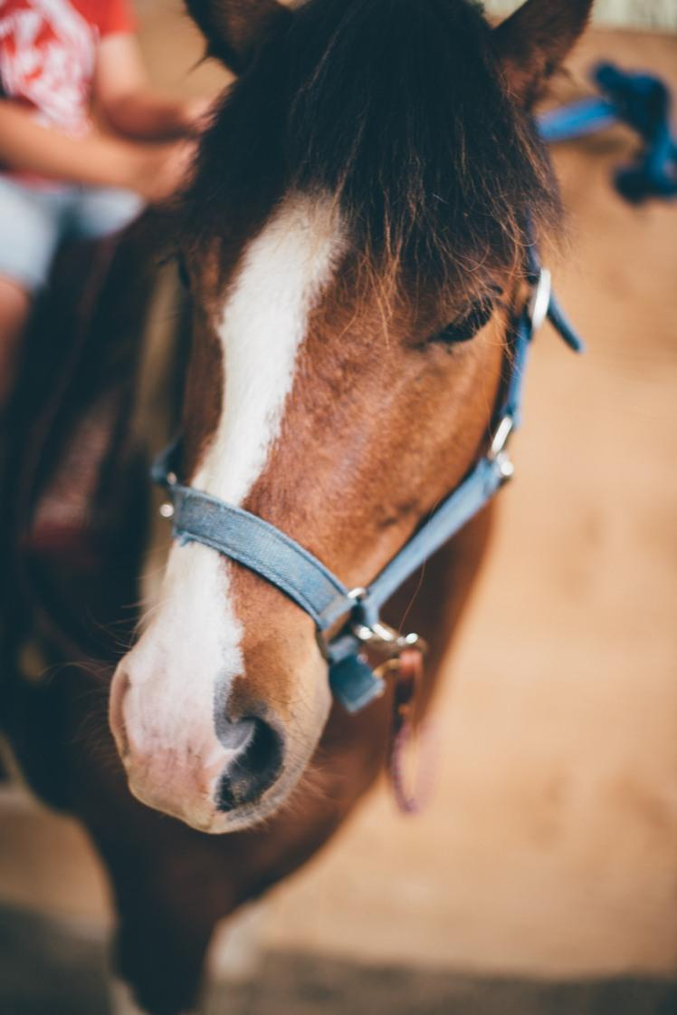 horseback riding-27