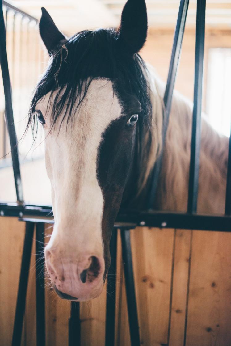 horseback riding-4